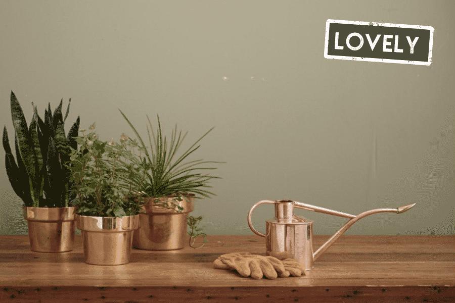 Plants in the golden pot