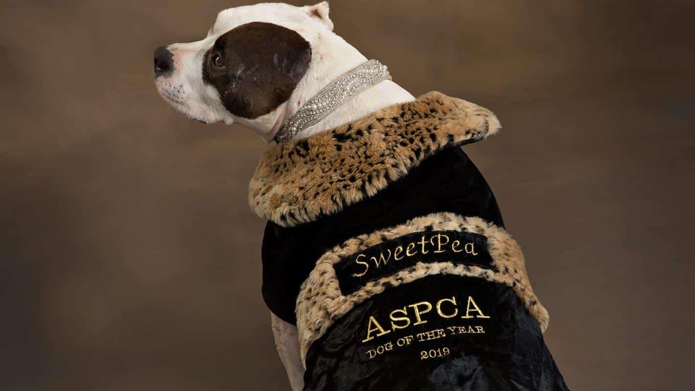 ASPCA Dog of the Year