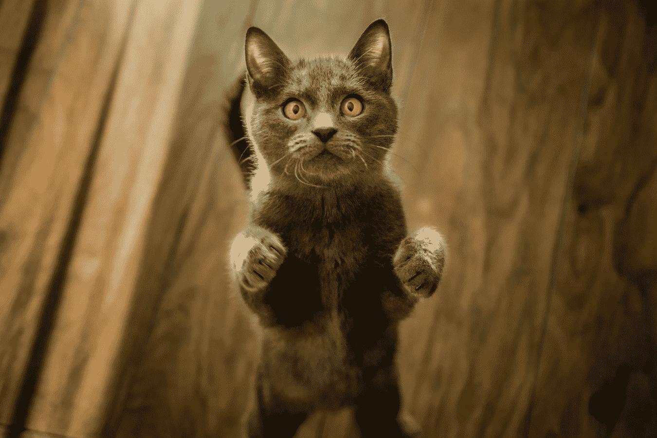 amused Cat