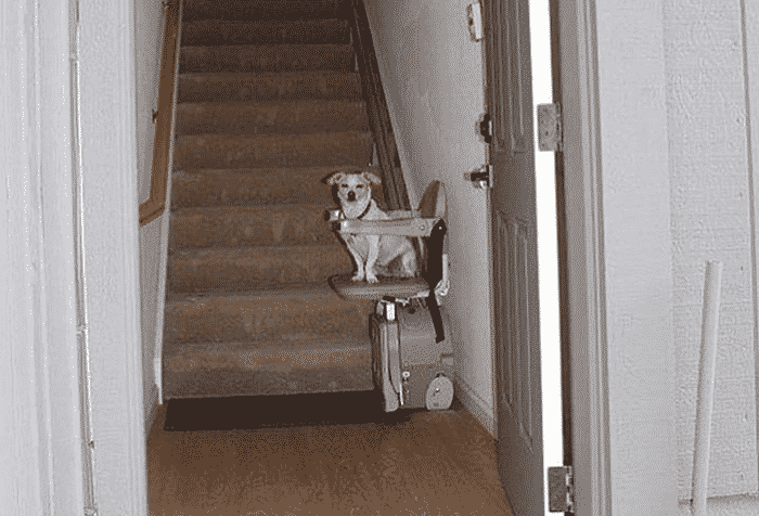 dog at the bottom of the stairs