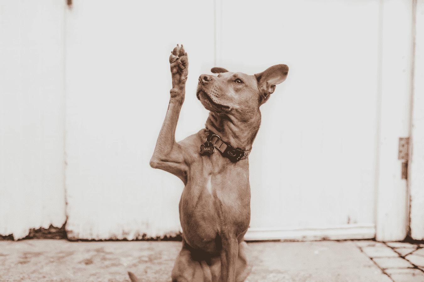 Dog's high five