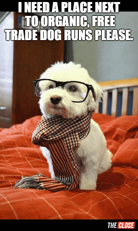 Hipster buyers are ruff meme